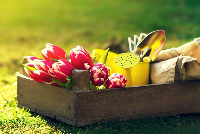 Simple Ways To Make Your Spring Garden Bloom On A Budget